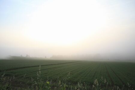 sol naciente: El sol naciente a Nakahata de niebla de la ma�ana