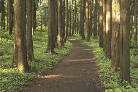 Cypress trees and trails Foto de archivo