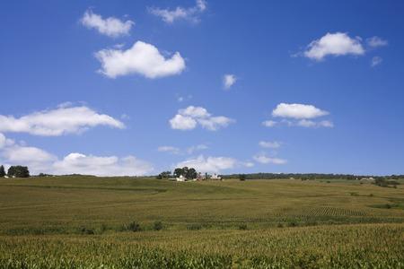 iowa: Iowa corn field