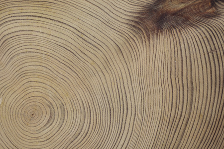 cedar: Yaku cedar tree rings Stock Photo