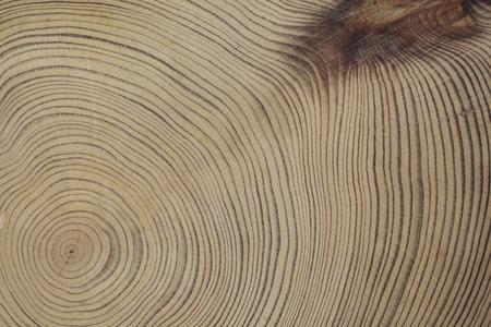 Yaku cedar tree rings Archivio Fotografico