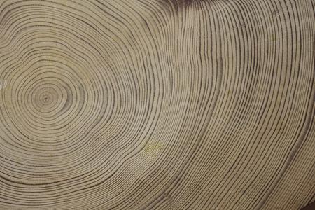 屋久杉の年輪 写真素材