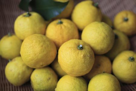 Citron 写真素材