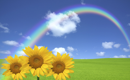 garden scenery: Green meadow and clouds and rainbow and sunflower