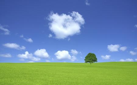 Ippongi weiden en wolken