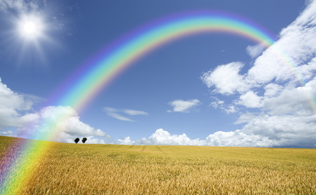 Wheat fields and trees and clouds and Rainbow and Sun