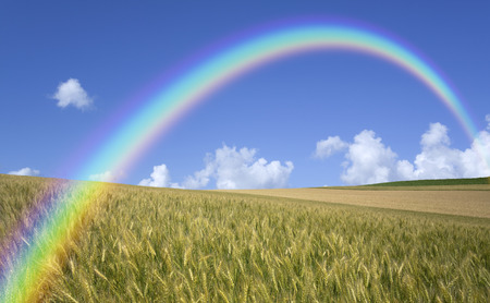 The wheat field and clouds and the Rainbow
