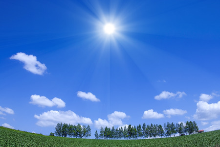 treelined: Birch tree-lined and sun Stock Photo