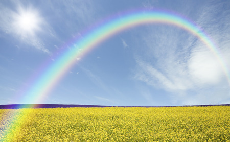 Yellow blooming hills and clouds and Rainbow and the Sun