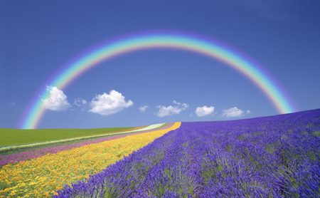 Lavender fields and clouds and the Rainbow