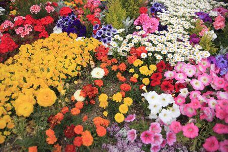 bushy plant: Flower bed Stock Photo