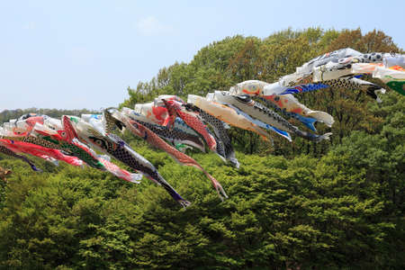 kanagawa: Carp of Wakamiya park