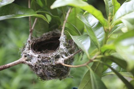nido de pajaros: Jerarqu�a de Bird Foto de archivo