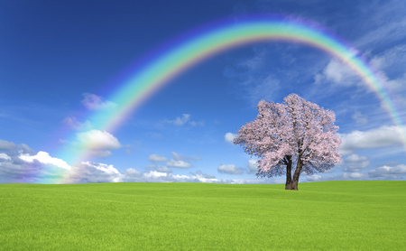 Trees of the meadow and the Rainbow