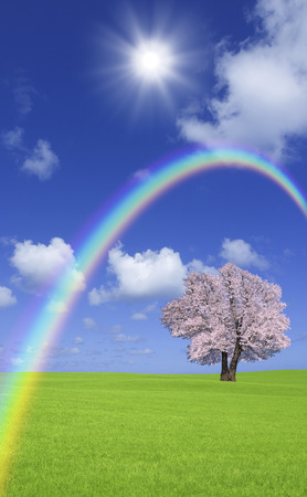 vertical orientation: Steppe cherry trees and clouds and the Rainbow Stock Photo