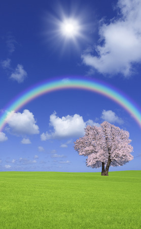 tree position: Steppe cherry trees and clouds and the Rainbow Stock Photo