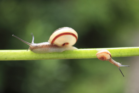 animal vein: Color leaves the snail family Stock Photo