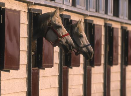 馬小屋からの馬を表示します。
