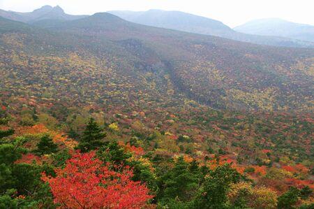 tara: Autumn leaves of Adachi Tara Plateau