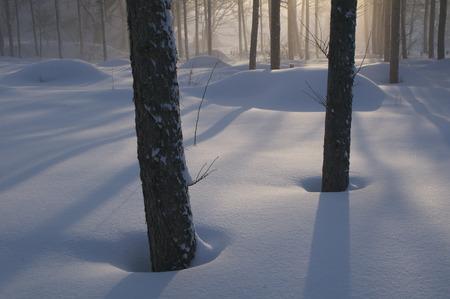 snowfield: Chaoyang and snowfield