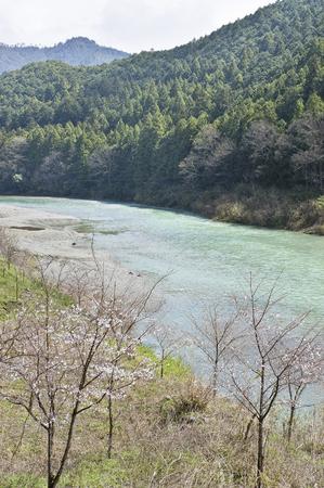 early: Early spring of Yoshino