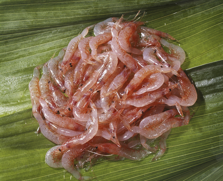 yui: Raw shrimp Stock Photo