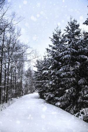 straight path: One straight road of snow