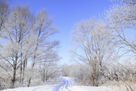 Trees arrived in rime ice Stock Photo
