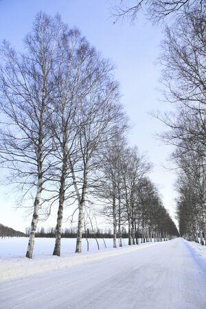 treelined: Winter tree-lined road Stock Photo