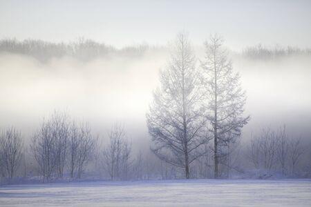 snow storm: Mononoke snow storm and trees Stock Photo
