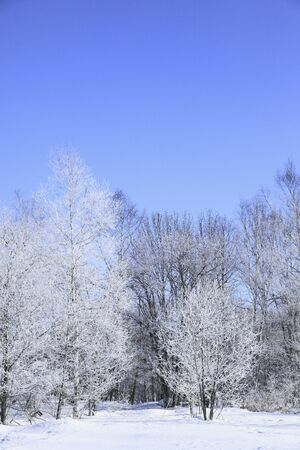 arrived: Trees arrived in rime ice Stock Photo