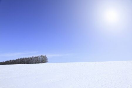 snowy field: Snowy field windbreaks