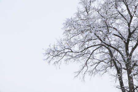 snowcovered: The Snow-Covered the tree Stock Photo