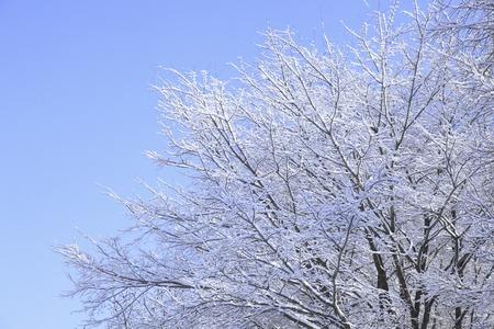 雪に覆われた木 写真素材