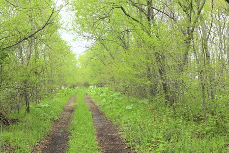 rut: Fresh green and one straight road