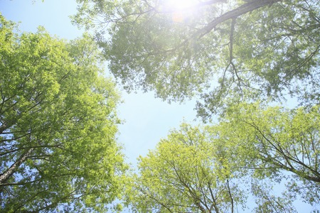filtering: Fresh green trees