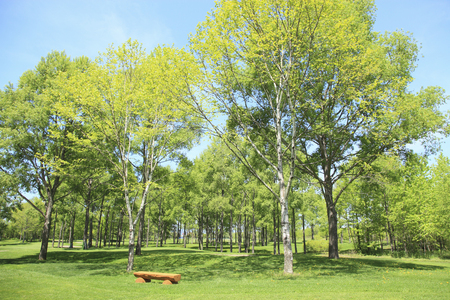 japan sky: Fresh green trees