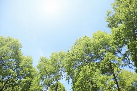 나무와 태양의 신선한 녹색 스톡 콘텐츠