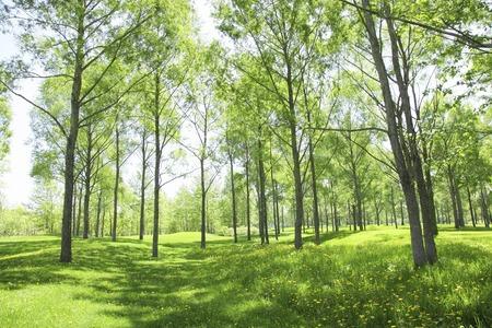 cielo despejado: Árboles verdes frescas Foto de archivo