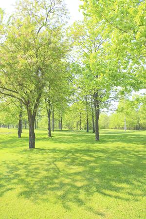 Fresh green trees