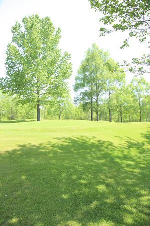 Fresh green trees 版權商用圖片 - 40204913