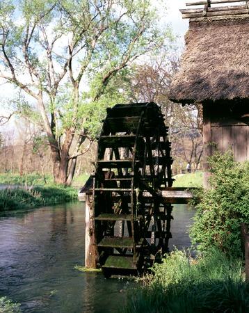 wasabi: Daio wasabi farm, water wheel and flow