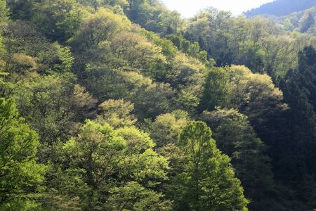 mountainside: Fresh green mountainside