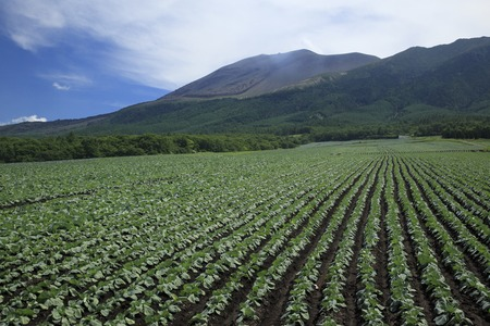 highland: Highland vegetable garden and Mount Asama