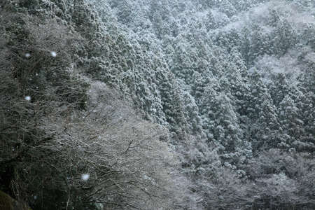 snowing: Snowing Hayashi Stock Photo