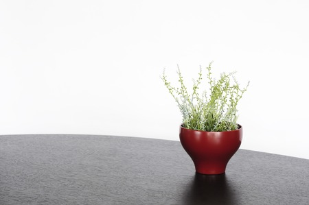 lacquerware: Plants were placed in a lacquer bowl Stock Photo