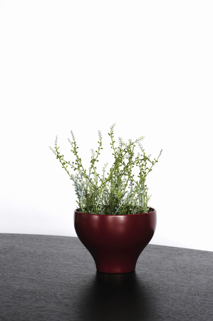 Plants were placed in a lacquer bowl Stock Photo