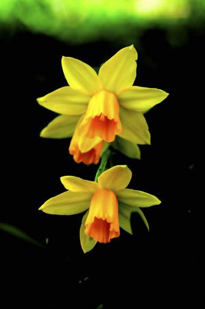 デジタル花 写真素材