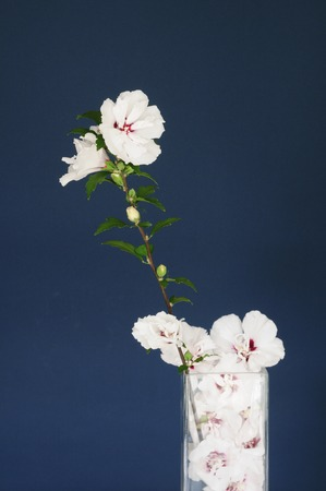 flower arrangements: Flower arrangements dependents of flowers Stock Photo