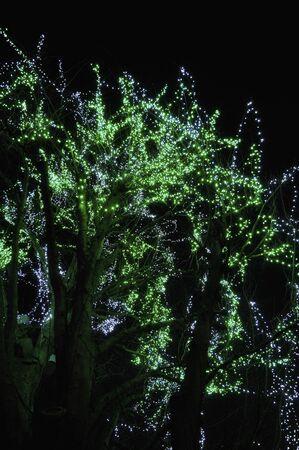 illuminations: Winter illuminations